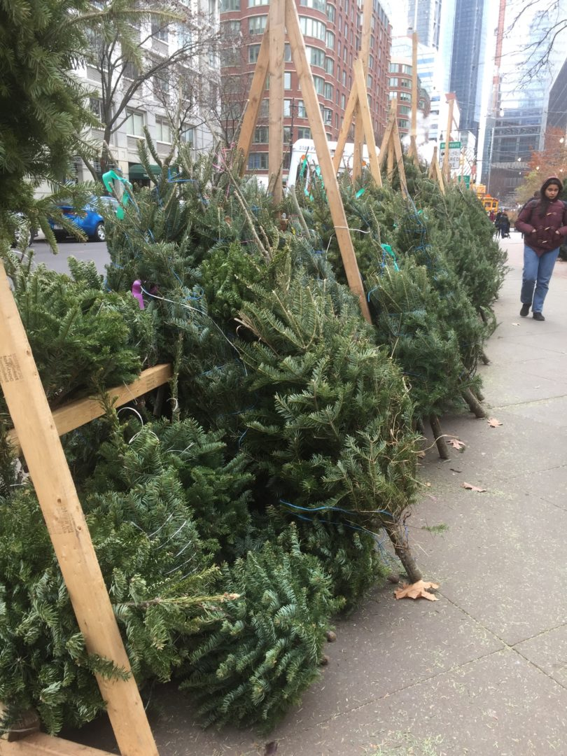 Christmas Tree Lots.Making A Christmas Card Out Of Tree Lot Data Emily